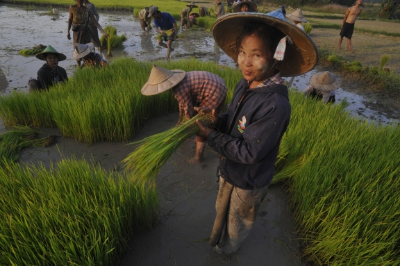 Women transplanting rice in Karen State, Burma (photo by Naomi Duguid)