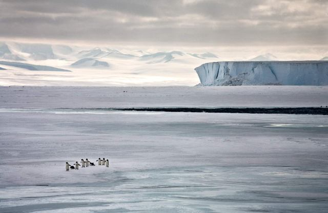 A Penguin's Life: Running to See, Ross Sea, Antarctica 2006 (photo © Camille Seaman)