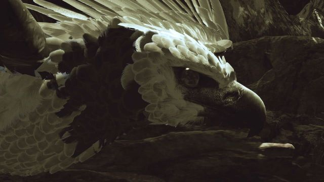 "The harpy eagle from ""Inside Tumucumaque"" (© Interactive Media Foundation)"