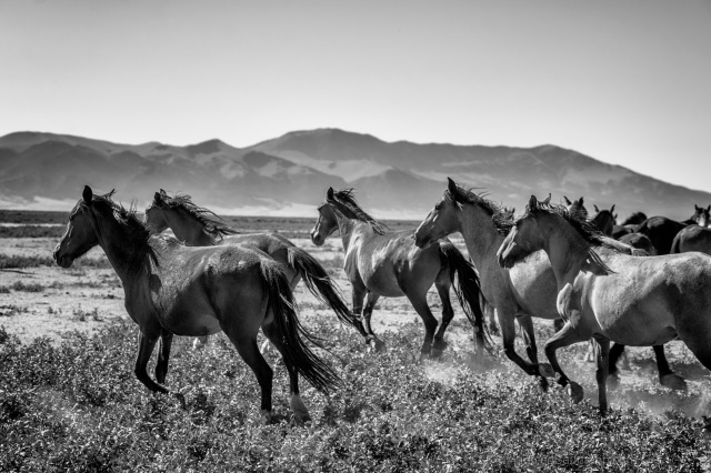 """Mustangs"" (photo by Manfred Baumann)"
